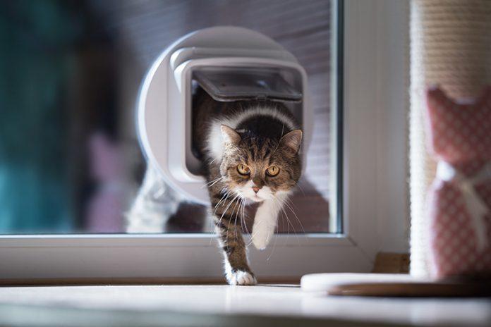 Katzenklappen gibt es in verschiedenen Ausführungen. Sogar Modelle mit Infrarot oder Chiperkennung sind zu haben.