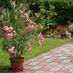 Pflanzen überwintern: Damit Sie auch im nächsten Sommer wieder Freude an Ihren Kübelpflanzen haben, sollten Sie beim Überwintern ein paar Dinge beachten.