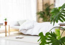Pflanzen sind nicht nur optisch ansehnlich, sondern erhöhen auch die Luftfeuchtigkeit und können mitunter Schadstoffe aus der Luft filtern.