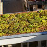 Die Dachbegrünung ist nicht nur ein echter Hingucker, sondern dient auch als Lebensraum für Tiere.