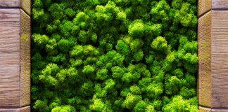 Moos ist ein Wunderwerk der Natur. Auch in Wohnräumen können Sie von den positiven Eigenschaften einer Mooswand profitieren.