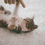 Teppich, Katze auf Teppich